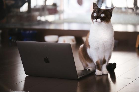 cat126IMGL6384_TP_V.jpg